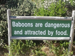 Baboons!!